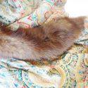 Sable Fur and Silk Scarf